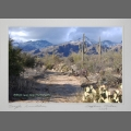 Sabino Canyon - Winter