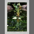 photocard-waterlily-04